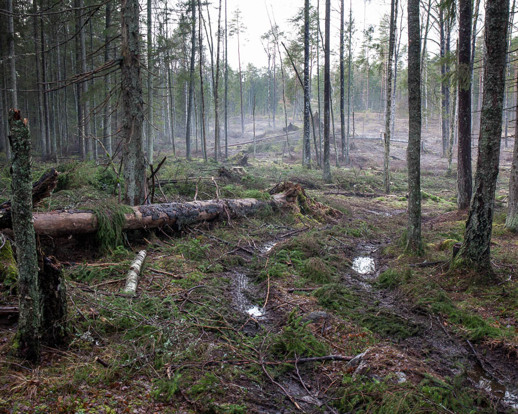 Forest loss / Forest gain. Copyright Nic Kruys/N