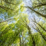 Forest Umbra