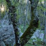Skog i gryningen