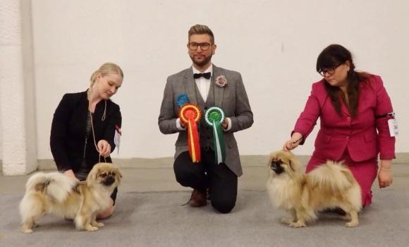 BOB & BOS Tibetan Spaniels Turku INT 2018
