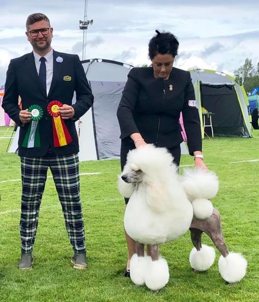 BOB & BOG-2 Standard Poodle SKC Askersund 2019