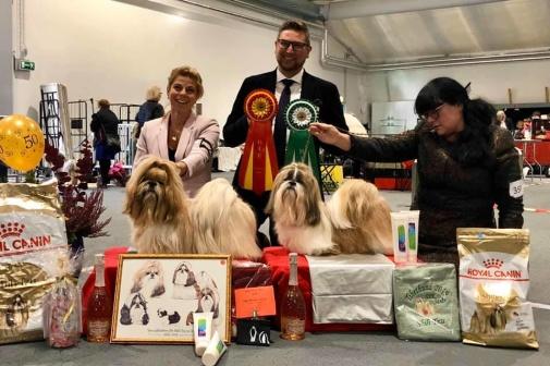 BOB & BOS Shih Tzu Tibethund 2019