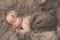 Nuföddfotografering Dalarna