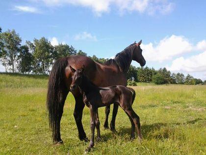 Leonora nyfödd