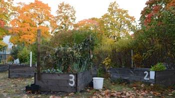 Ett par av odlingslådorna i Solrosparken