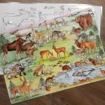 Bordsunderlägg-skogens-djur