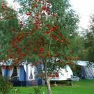 Åretrunt camping