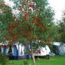 Året runt camping