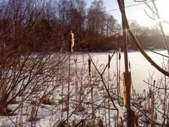 vinter över storpesjö