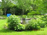 Trädgårdsdammen