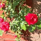 rumma ros