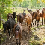 Hästbilder hemsidan1-4