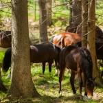 Hästbilder hemsidan1-12