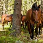 Hästbilder hemsidan1-13