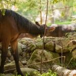 Hästbilder hemsidan1-17