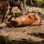 Hästbilder hemsidan1-20