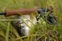 Рыбалка на реках и озерах Швеции