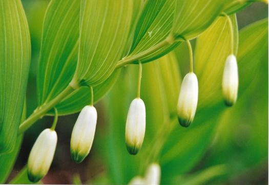 Bilden visar tre blommor i närbild