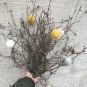 Ullbollar till påskriset eller julgranen - Ullbollar:senapsgult, vitt, grått