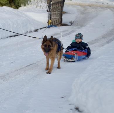 Även barnbarn gillar hundar