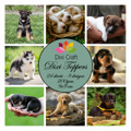 Dixi Toppers - Hundvalpar