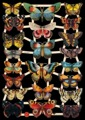 Bokmärke - Fjärilar