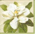 Servett Vit Magnolia