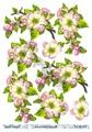 Barto Design 3D klippark - Blomma och bär