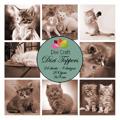 Dixi Toppers - Kattungar i svart/vitt