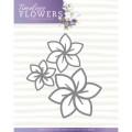 Precious Marieke Dies - Timeless Flowers - Dahlia Trio