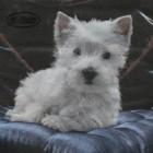 Servett vit hund