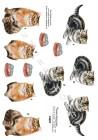 Dan-mobile 3D Klippark - Kattungar