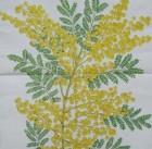 Servett Mimosa