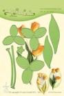 LeCreá - Dies - Multi die flower 017 Tulip