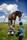 Barn. hage och häst
