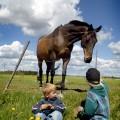 o_barn_m_hast