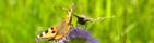 Fjärilar parkurs