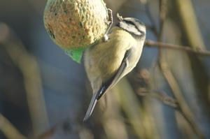 Julbord för småfåglar Foto: Stina Elg
