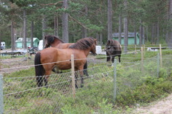 You can leave your horses in our paddock while eating in the restaurant.