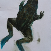 Frog I - watercolor - ca 15x20 cm