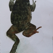 Frog III - watercolor - ca 15x20 cm