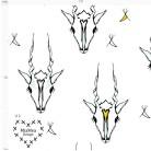 1,5 m klipp! Antelope