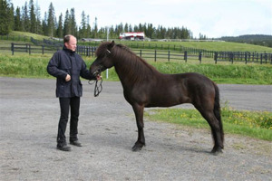 Katla - our black beauty, sadly lost her foal