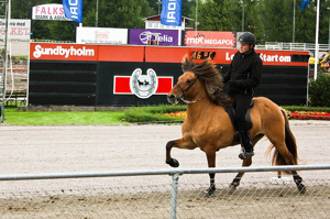 Ísadóra at the breeding show in 2012 (receiving 8,28 for riding abilities as a 5 year old)
