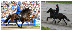 Garri and Vísa - both magnificant horses! (picture of Garri is borrowed from garri.dk)