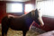Alfa was content staying the night in the stable at Kullen (Sundsberg breeding farm)