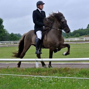 Ísar showing his greatness with Vignir in the saddle