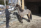 Ingeborg and Keilir outside the stable at Lian