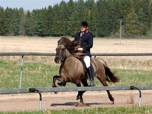 Extraordinary stallion, Ísar frá Keldudal, is a central part of our breeding at SundsbergKval