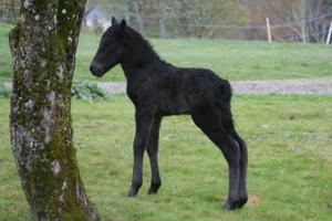 Our little black beauty!